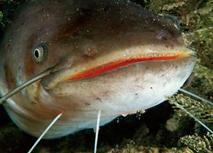 Конкретная рыба, которую вы могли идентифицировать и охарактеризовать